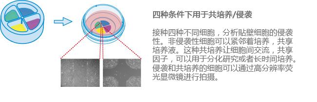 E_8XXXX_CI_4Well_image3副本.jpg