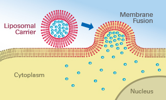 R_60XXX_FuseIt_membrane_fusion.jpg