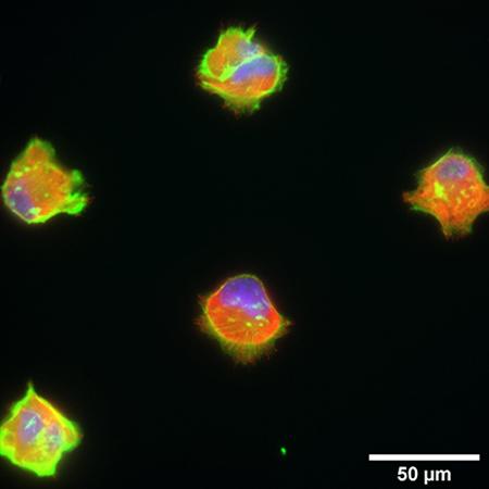 S_83XXX_Slide_microPattern_cells04.jpg